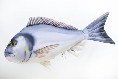 Riba - igrača GABY The Gilthead Sea Bream 60 cm - orada | GP-175600